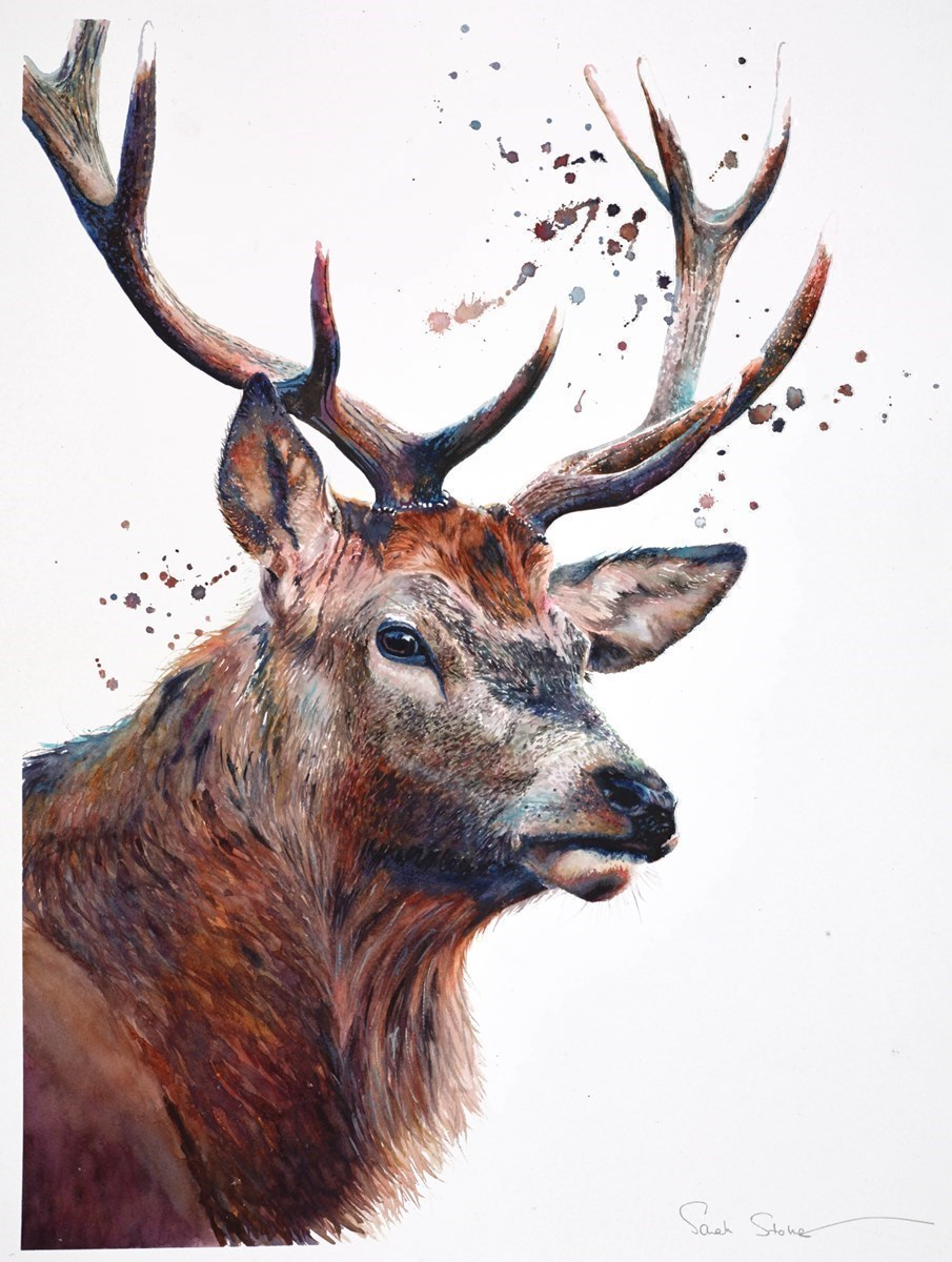 Heathland Stag II by Sarah Stokes -  sized 22x30 inches. Available from Whitewall Galleries